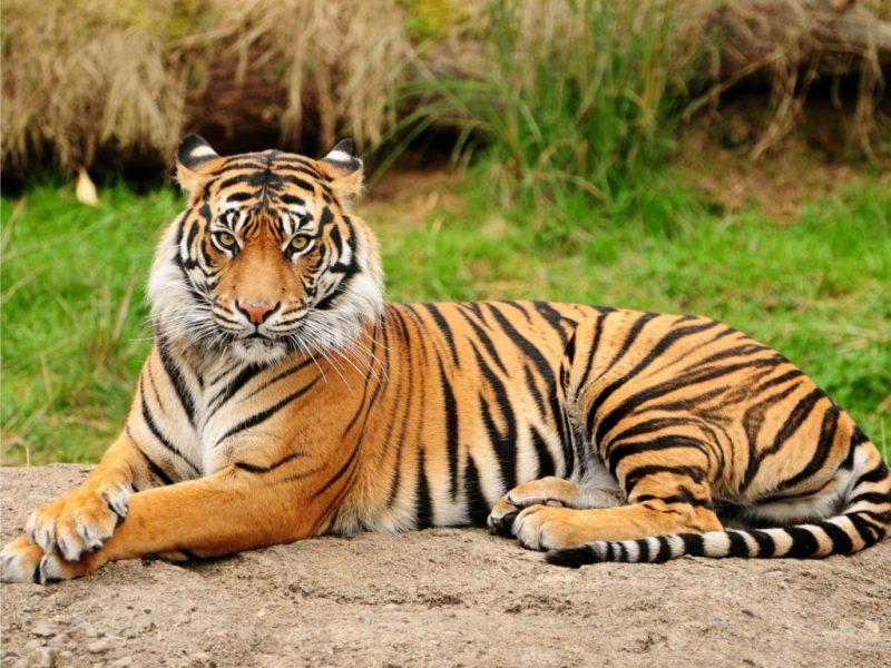 410+ Gambar Fauna Di Wilayah Oriental Terbaru