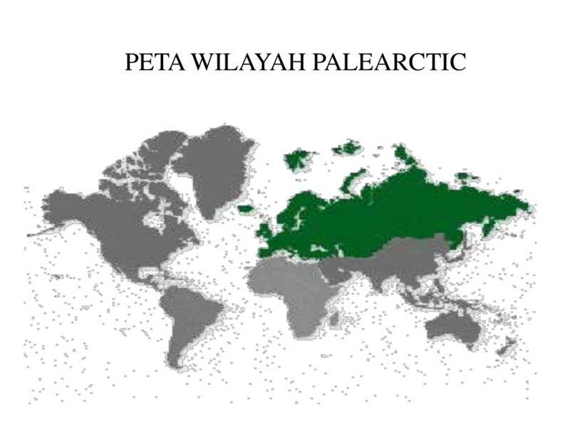 Peta Wilayah Paleartik